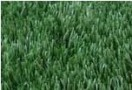 Optigrass PLUS 60-16 MF**